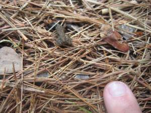 Tiny little frogs everywhere!