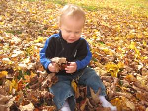 Thane discovers the leaves