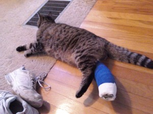 Poor sad kitty!