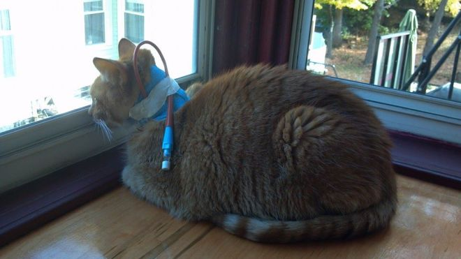 Even dying cats like watching squirrels