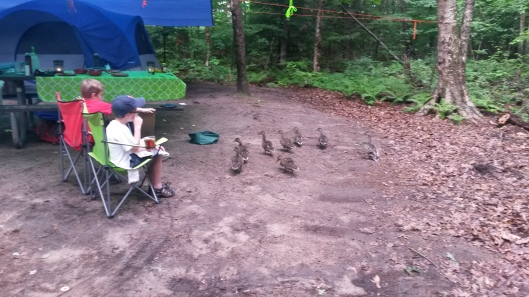 It's a bad sign when waterfowl make themselves at home in your campsite