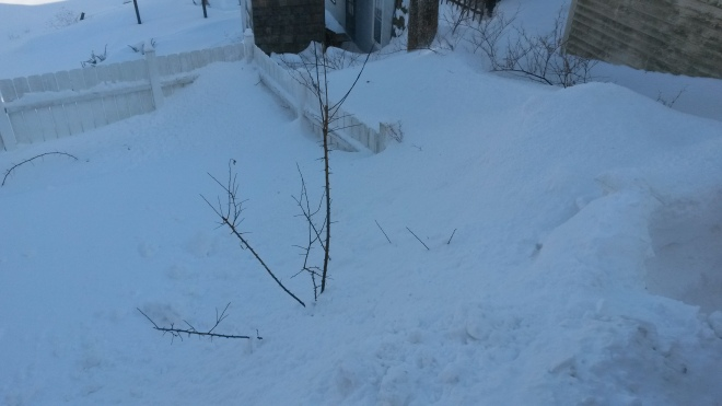 That fence below is a 7 foot fence. That snow bank is more than 12 feet tall. Granted, that's where we blow the snow, but still...