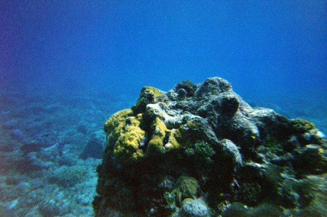 Cozumel reefs