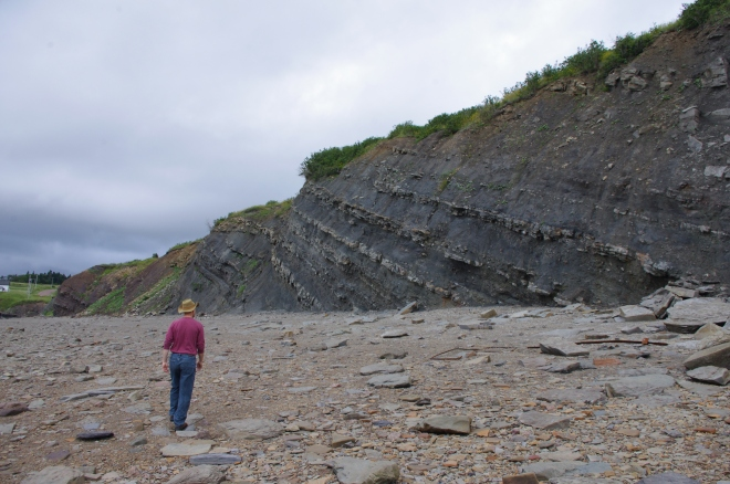 The tilted strata were so very clear. Apparently further down the coast than we could go with the tides stand 320 million year old trees where they first grew.