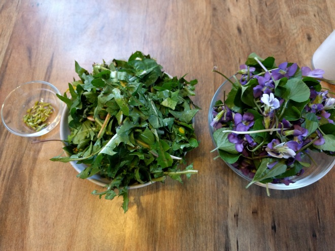Violets, dandelions and green briar