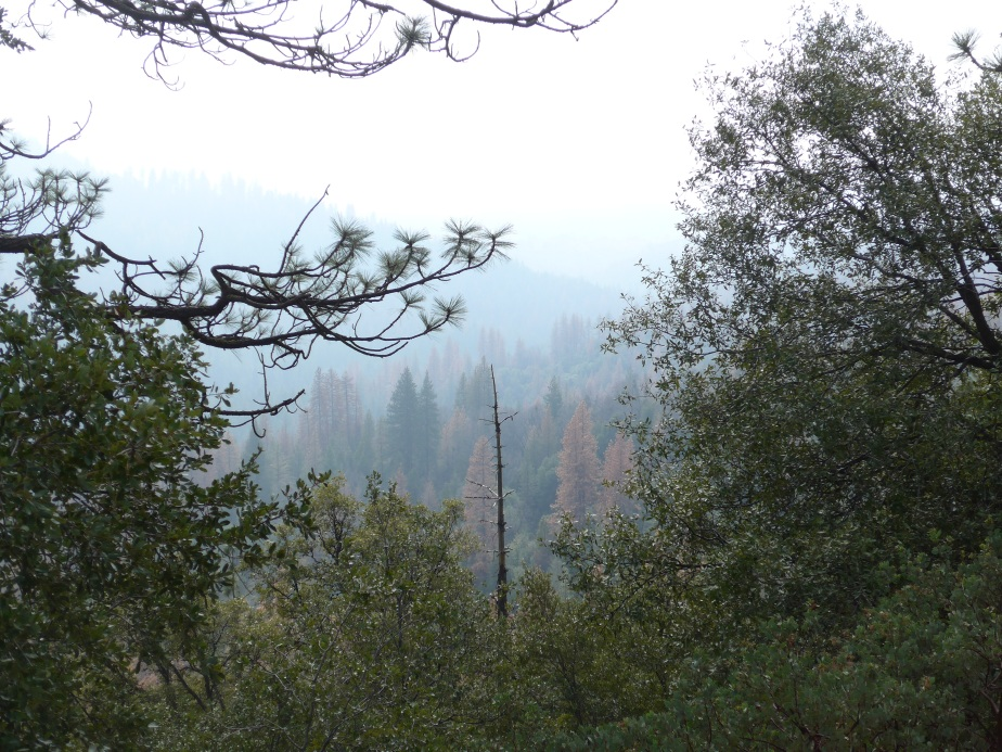 The dying forests of California