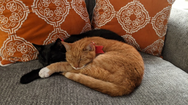 Two cats snuggling on a couch