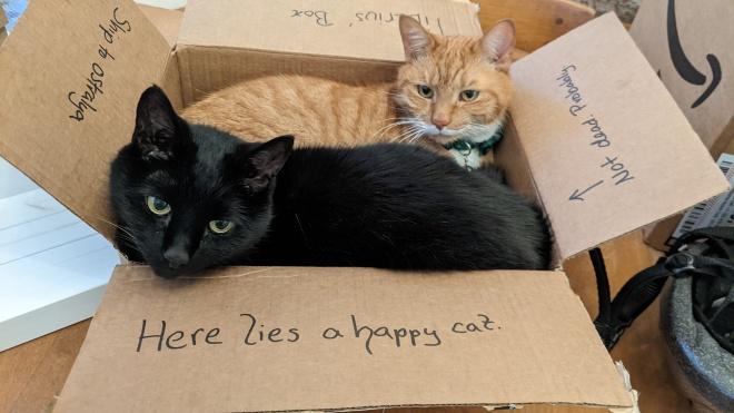 A black and an orange cat in a box